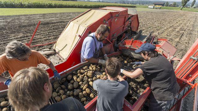 La récolte des pommes de terre dans le canton de Fribourg. [Gaetan Bally - Keystone]