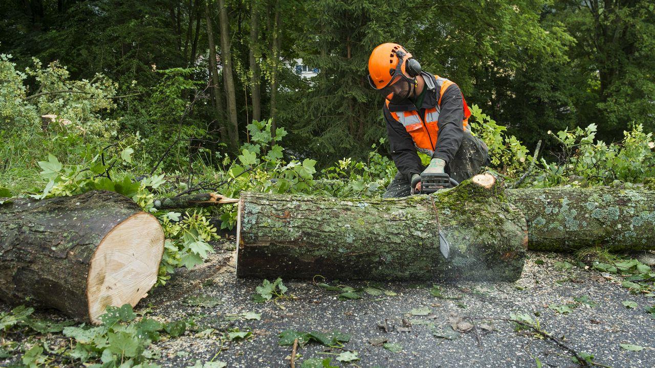 Les forêts fribourgeoises souffrent des changements climatiques. La sécheresse fragilise les épicéas, les hêtres et les frênes. Les coupes préventives vont se poursuivre, annonce l'Etat de Fribourg. [JEAN-CHRISTOPHE BOTT - KEYSTONE]
