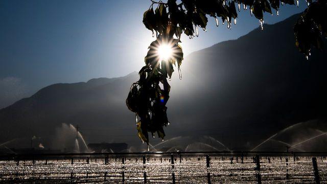 Lutte contre le gel dans la vallée du Rhône [Jean-Christophe Bott - Keystone]