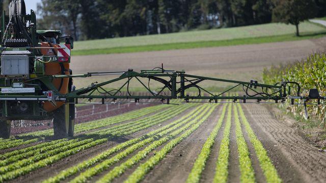Un tracteur applique des pesticides sur un champ de laitues près de Birmenstorf (AG) le 17 septembre 2019. [Christian Beutler - Keystone]