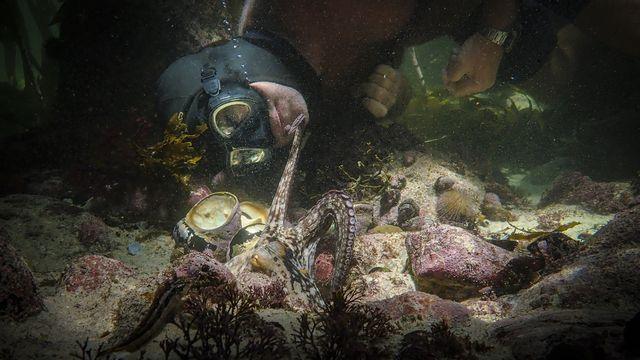 """Le réalisateur Craig Foster en interaction avec une pieuvre dans une scène de """"La sagesse de la pieuvre"""". [Keystone/Netflix via AP]"""
