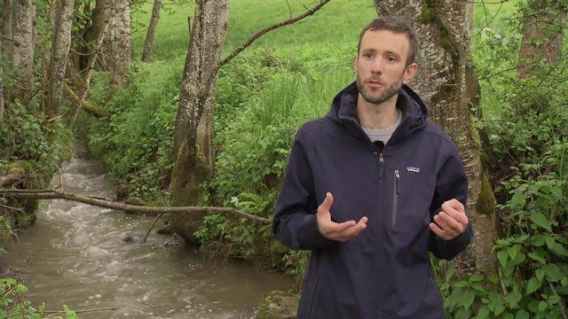 Reportage les bottes dans Le Bainoz, cours d'eau fribourgeois [RTS]