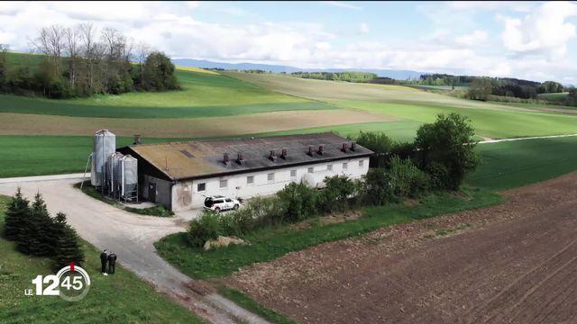 A Thierrens (VD), un projet de porcherie industrielle pour 1500 animaux soulève des oppositions [RTS]