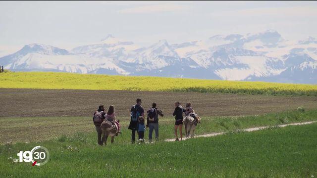 Les randonnées à dos d'âne séduisent toujours plus de Suisses. Reportage à Vugelles-La Mothe, dans le canton de Vaud [RTS]