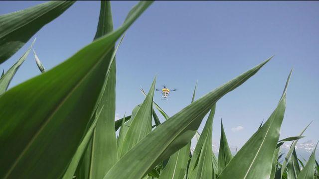 La campagne sur les pesticides s'envenime. Elle a aussi fait sortir du bois un poids lourd du monde paysan, la Fenaco [RTS]