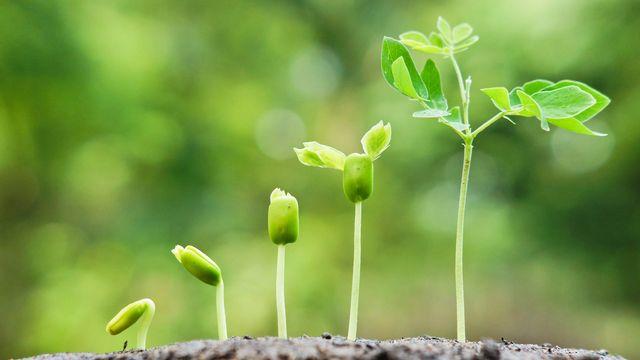 Les plantes, un exemple de l'intelligence du vivant. [weerapat - depositphotos]