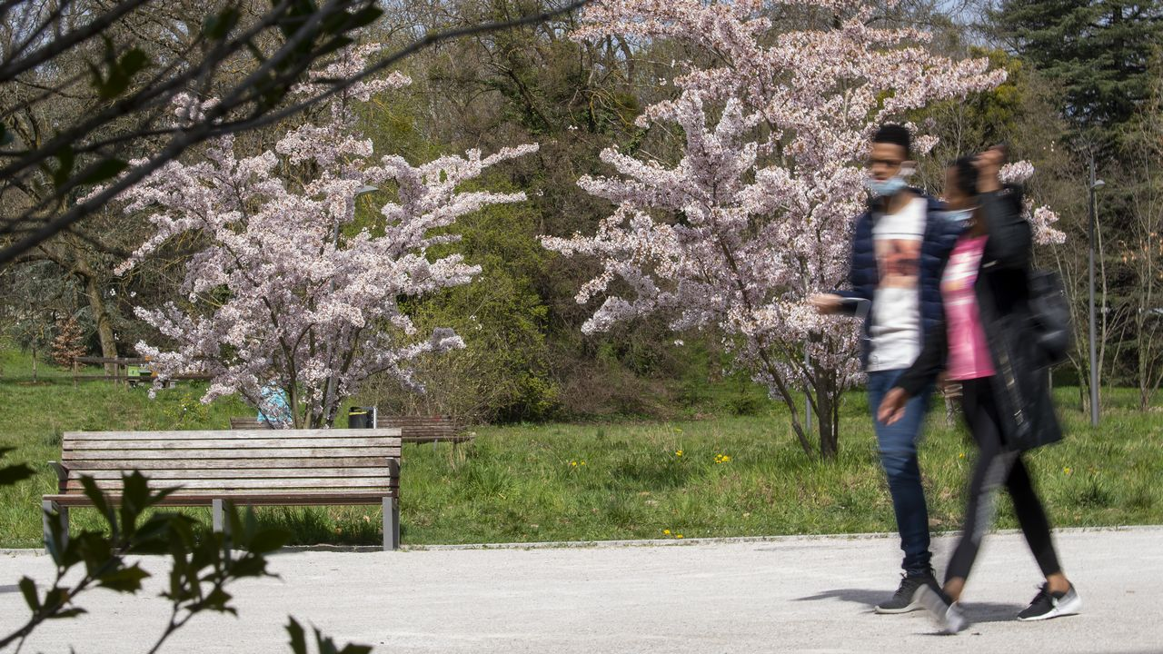 Genève veut renforcer la couverture végétale en ville. [Martial Trezzini - Keystone]
