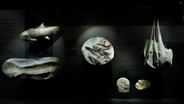 Des fossiles du Spitzberg exposés à Fribourg. michaelmaillard.com  Etat de Fribourg - Staat Freiburg [michaelmaillard.com  - Etat de Fribourg - Staat Freiburg]