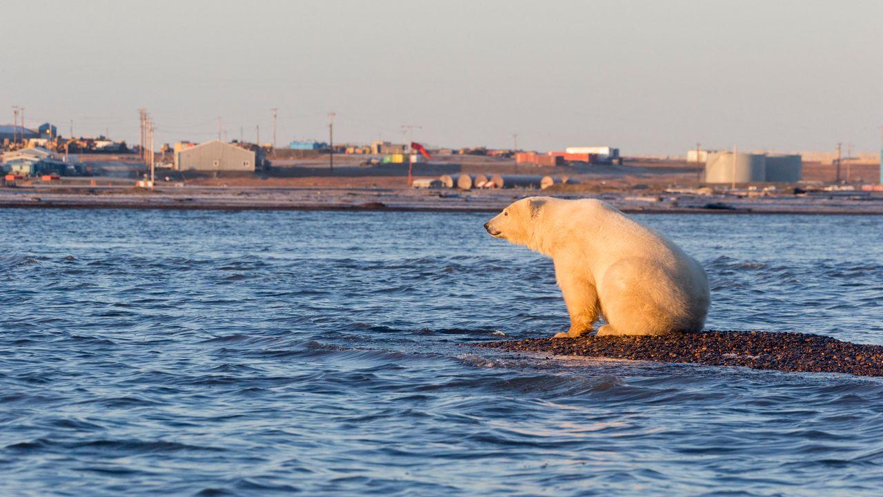 Washington suspend les forages de pétrole dans une zone protégée de l'Arctique. [Sylvain Cordier - AFP]