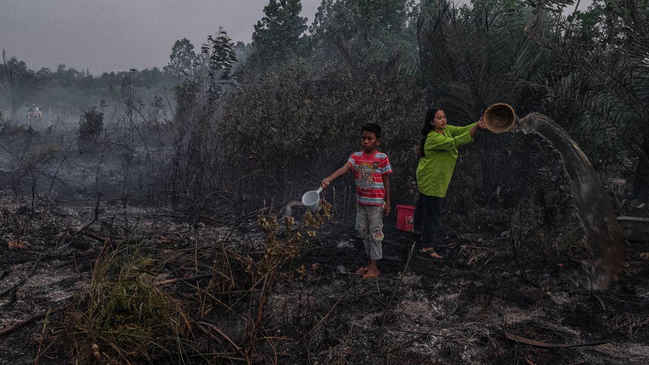 Des habitants tentent d'éteindre un incendie de forêt dans une tourbière, le 4 octobre 2019 en Indonésie. [Afrianto Silalahi - AFP]