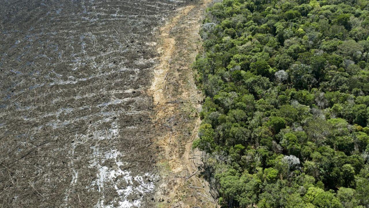 Une déforestation record en Amazonie pour un mois de mai. [Florian Plaucheur - AFP]