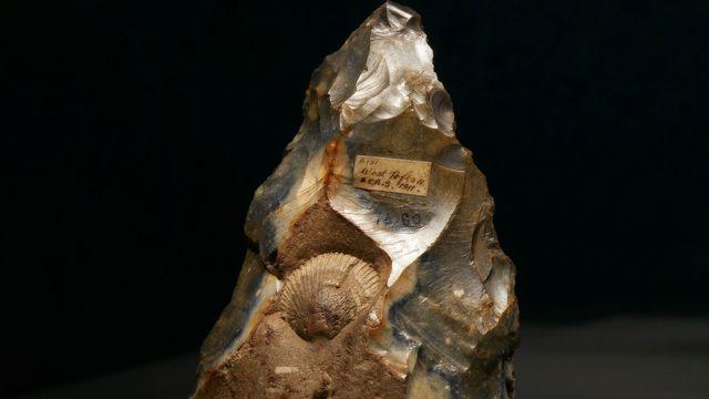 Biface en silex incrusté d'un coquillage fossile volontairement préservé par son tailleur.  Noé Cotter Laténium [Noé Cotter - Laténium]