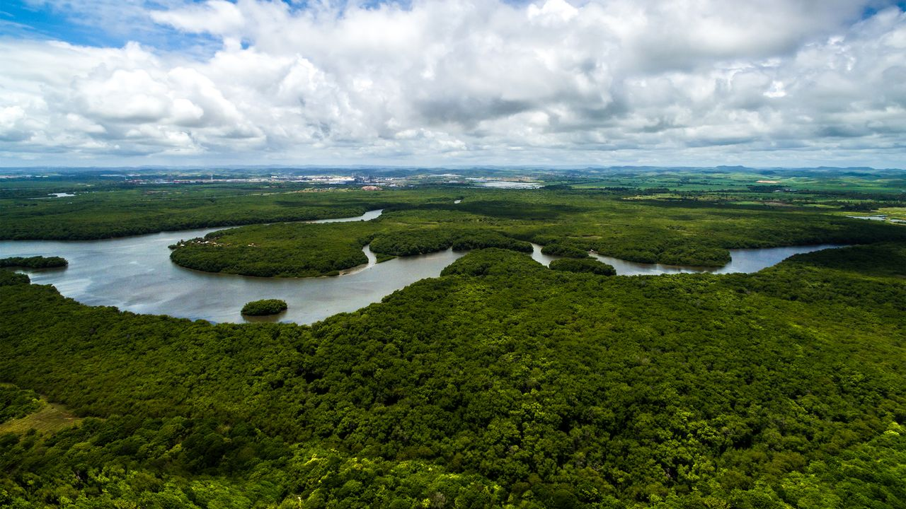 "La forêt amazonienne n'est plus le ""poumon"" de la Terre. gustavofrazao Depositphotos [gustavofrazao - Depositphotos]"
