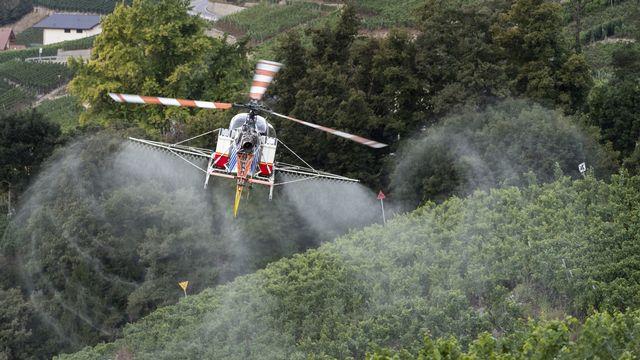Un hélicoptère d'Air-Glaciers traite des vignes dans la région de Sierre (VS). [Alessandro della Valle - KEYSTONE]