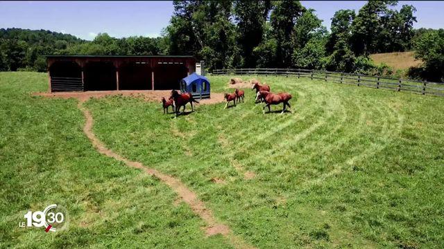 Le cheval des Franches-Montagnes conquiert la Virginie [RTS]