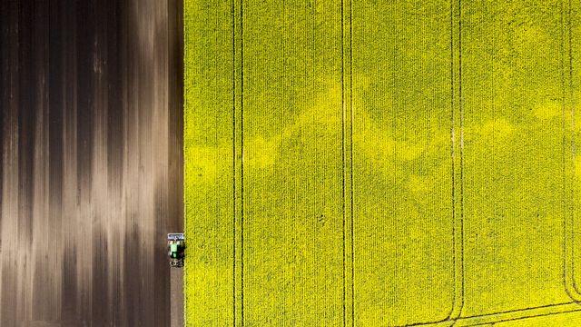 L'obligation de stocker des semences s'applique aux entreprises qui importent plus de 100 kg de semences de colza par an. [Laurent Gillieron - keystone]