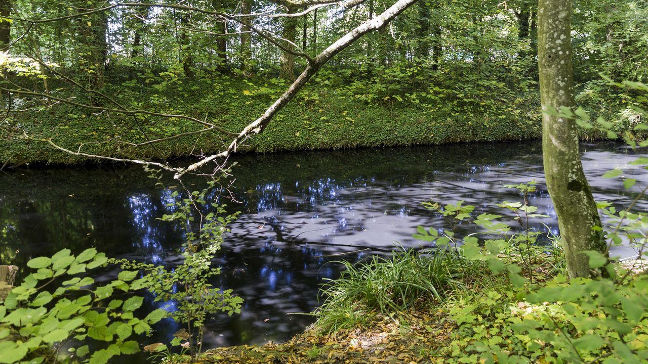 La Chamberonne fait partie des cours d'eau lausannois qui font l'objet d'observation du Service des eaux.  [Cyril Zingaro - Keystone]