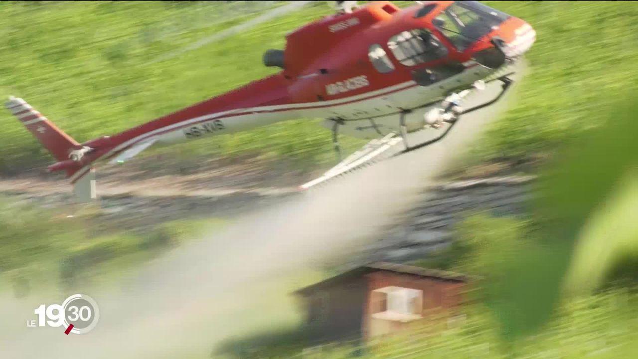 Le traitement de la vigne par hélicoptère, une spécificité romande qui résiste malgré l'essor du drone [RTS]
