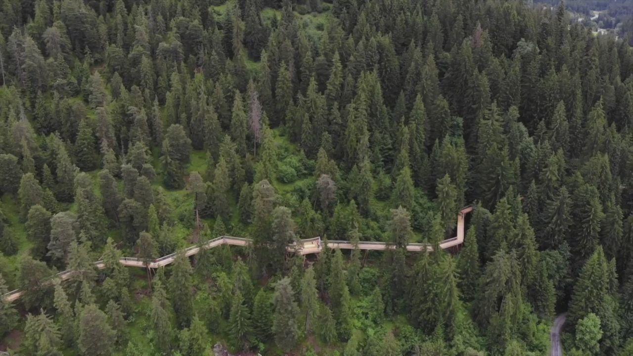 La plus longue passerelle dans les arbres du monde inaugurée à Laax (GR) [RTS]
