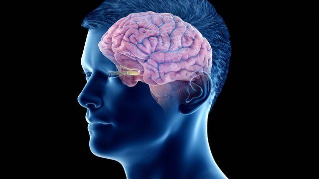 Le cerveau ne reste pas inactif durant la nuit. [Sebastian Kaulitzki - Science Photo Librairy via afp]