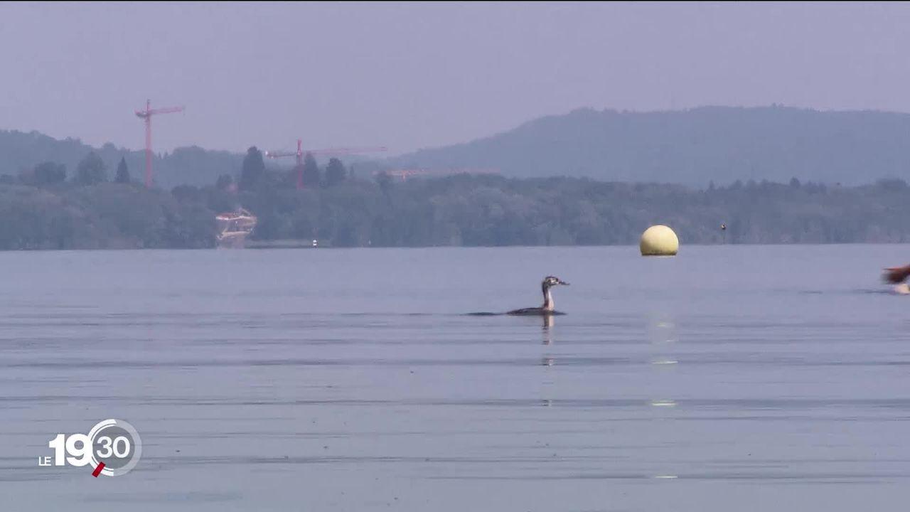 La baignade est à nouveau admise dans le lac de Neuchâtel mais la prudence reste de rigueur. [RTS]