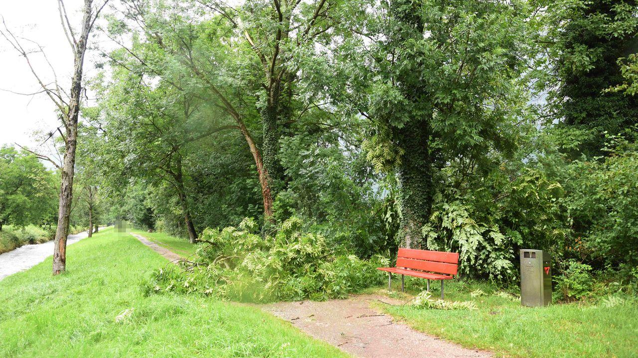 La famille était en balade à Flums losque des branchages ont été arrachés par le vent. [Kantonspolizei St. Gallen/Keystone]