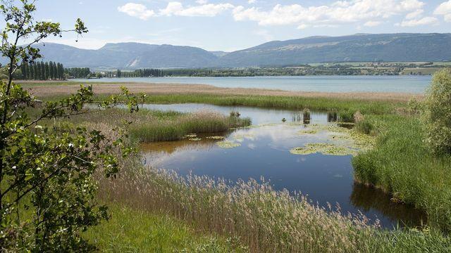 La Grande Cariçaie, la réserve naturelle qui longe la rive sud du lac de Neuchâtel. [Laurent Gilliéron - Keystone]