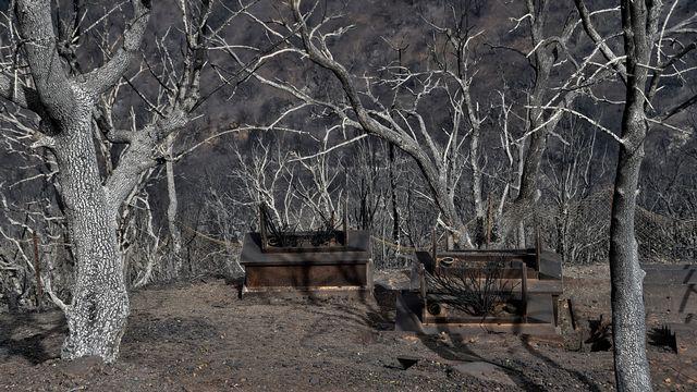 Des arbres carbonisés par les feux de forêt à Tizi Ouzou. [Ryad Kramdi - AFP]