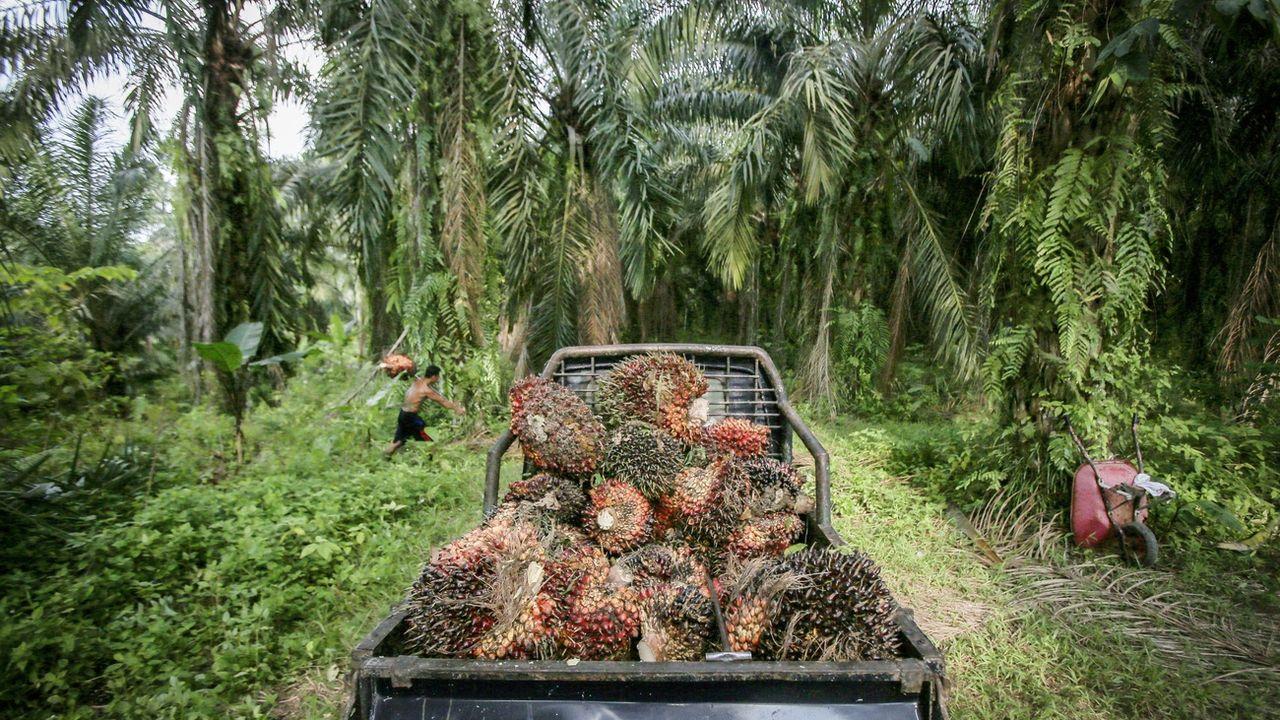 L'huile de palme indonésienne pourra bientôt être importée à moindre prix en Suisse. [Dedi Sinuhaji - EPA]