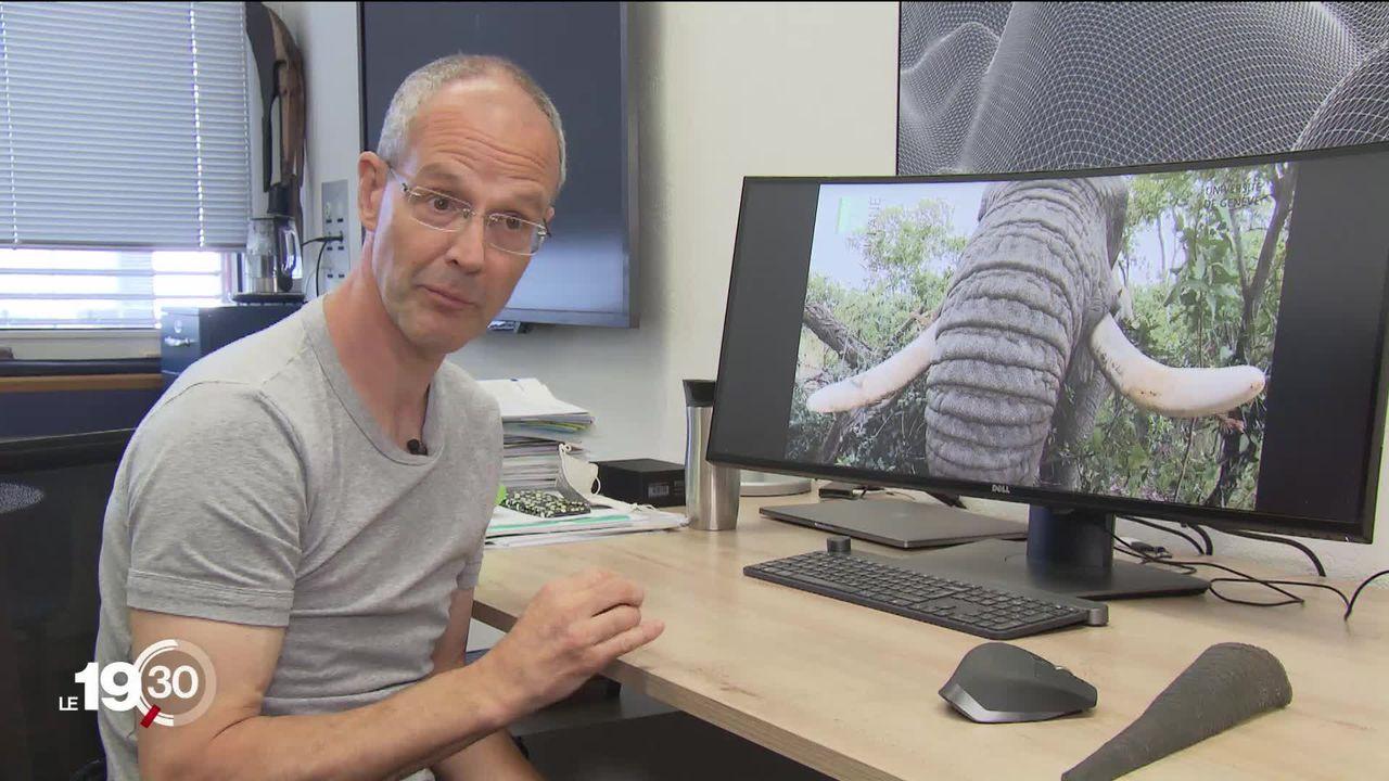 L'Unige étudie les trompes d'éléphants au profit de la recherche dans la robotique. [RTS]