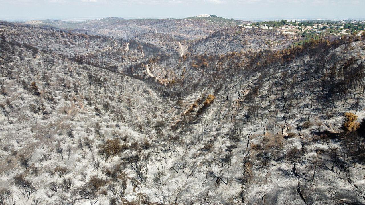 Une vue des collines près de Jérusalem où la forêt et le maquis ont été détruits par un important incendie, le 19 août 2021. [Abir Sultan - EPA/Keystone]