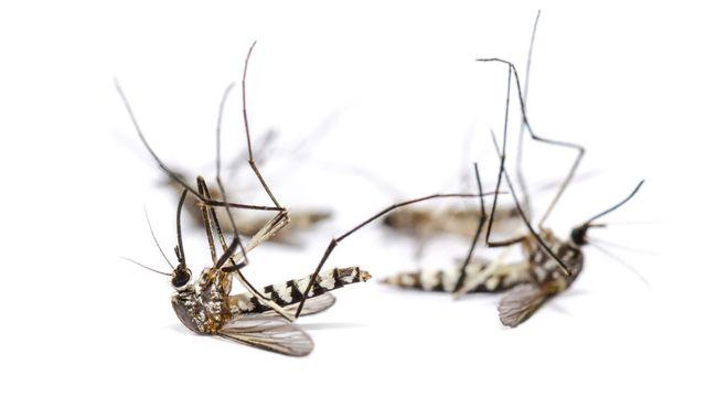 La technique de l'insecte stérile est testée contre les moustiques tigres à la Réunion. yongkiet Depositphotos [yongkiet - Depositphotos]