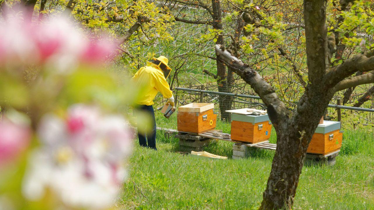 La grande majorité des abeilles domestiques de Suisse est originaire de Slovénie. marinagreen Depositphotos [marinagreen - Depositphotos]