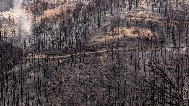 Eco-anxiété: quand la crise climatique fait fondre le moral. [Dominika Zarzycka/NurPhoto - AFP]