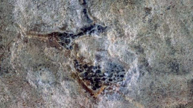 """Un """"dragon volant"""" du jurassique a été identifié pour la première fois dans l'hémisphère sud. [Jhonatan Alarcón-Muñoz - Acta Palaeontologica Polonica]"""