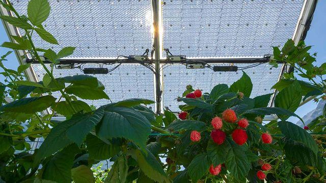 Énergie solaire (3/5): vers une production photovoltaïque agricole ? [©Insolight]