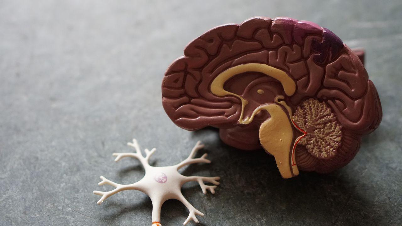 Près de 16'000 personnes sont victimes d'un accident vasculaire cérébral (AVC) chaque année en Suisse. [ROBINA WEERMEIJER - UNSPLASH]