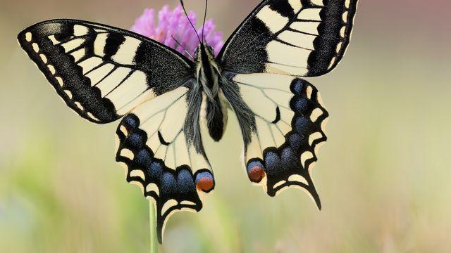 L'effet papillon [RTS]