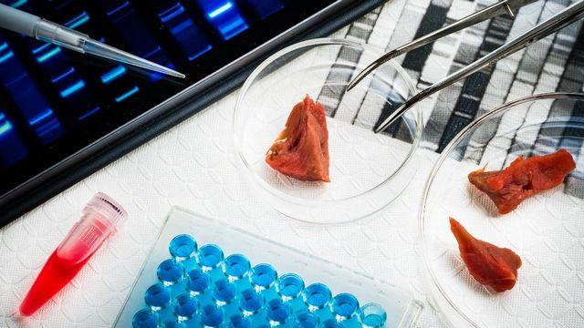La viande cultivée en laboratoire séduit l'industrie alimentaire. [Phanie via AFP]
