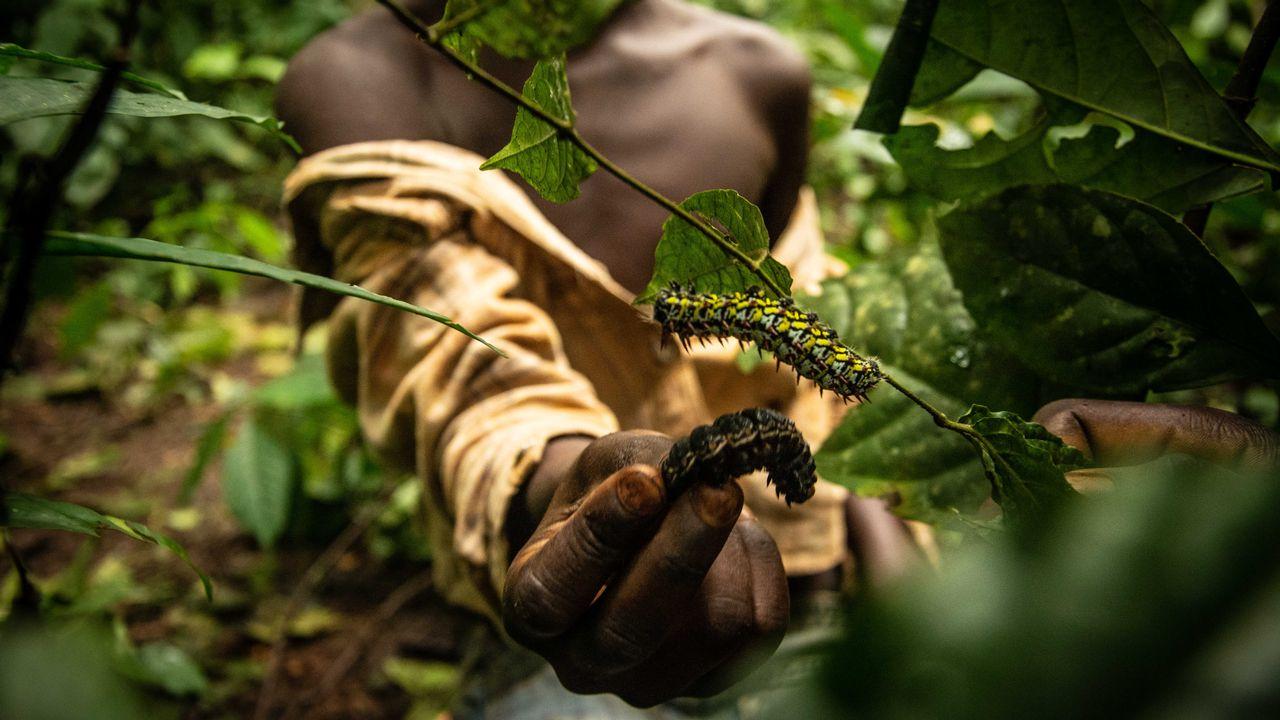 Des chenilles contre l'insécurité alimentaire en République centrafricaine [Carol Valade - DR]