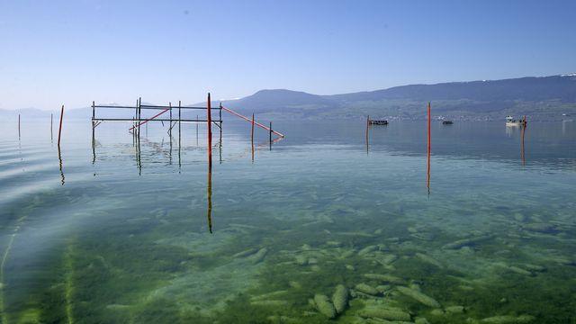 Des prélèvements d'échantillons d'eau et de sédiments dans le lac de Neuchâtel sont faits par l'armée sur la place de tir de Forel. [Salvatore Di Nolfi - Keystone]