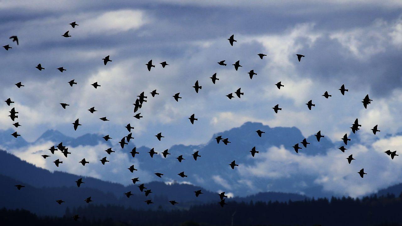Des millions d'oiseaux migrent actuellement au-dessus de l'Europe et de la Suisse. [Karl-Josef Hildenbrand - Keystone]