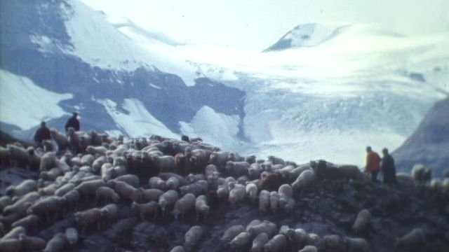 Descente des moutons de la Gemmi [RTS]