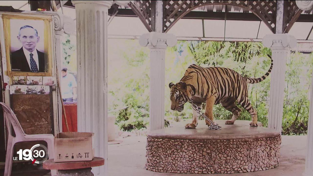 """L'expo photo """"Animalités"""" à Genève met en scène la relation de l'homme et des animaux [RTS]"""