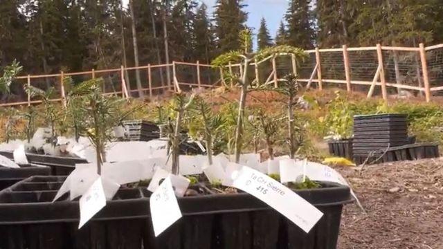 Des plantations expérimentales pour identifier les essences qui peupleront les forêts de demain. [RTS]