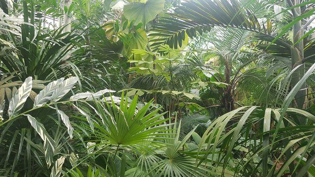 Préservation du vivant (4/5): un jardin botanique en pleine mutation. [©DR]