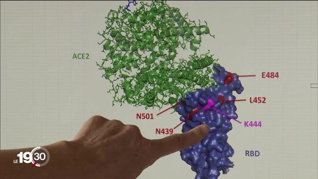 Le CHUV et l'EPFL ont découvert un anticorps monoclonal très efficace contre le Covid-19. [RTS]