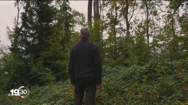 L'automne a du retard cette année. Les forêts jurassiennes sont encore vertes après les précipitations abondantes de cet été [RTS]