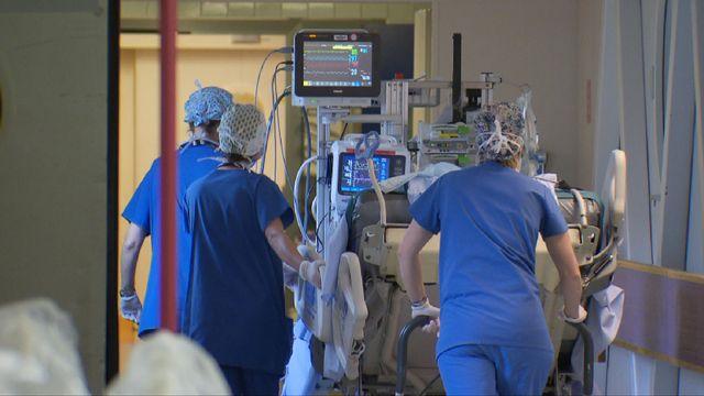 Pour la première fois, un rein de porc génétiquement modifié a été transplanté sur une femme en état de mort cérébale. (Image prétexte) [RTS]