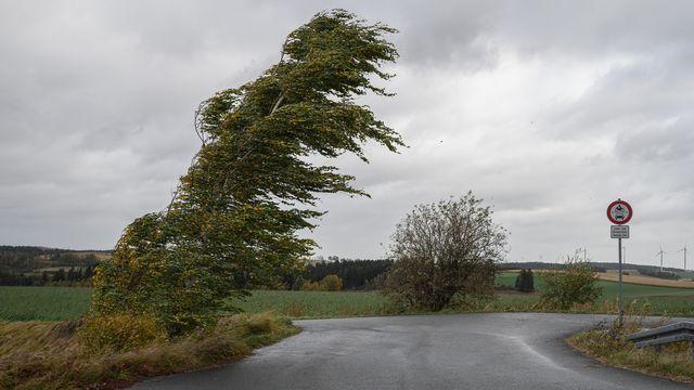 Un vent violent fait plier un bouleau en Bavière. [Daniel Vogl / DPA - KEYSTONE]